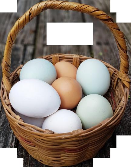 Eierkorb